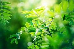 Groene verse bladeren op boom Royalty-vrije Stock Fotografie
