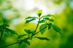 Groene verse bladeren op boom Stock Afbeeldingen