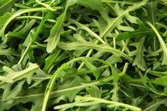 Groene verse rucolaachtergrond Raketsalade of arugula Royalty-vrije Stock Foto
