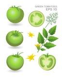 Groene verse tomaten Royalty-vrije Stock Foto