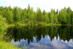 Groene vijver in Westelijk Siberië Stock Foto's