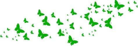 Groene vlinders voor groetkaarten Stock Fotografie