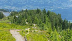 Groene wandelingsweg van hoge alpien in een bos Stock Foto's