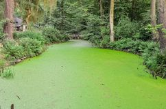 Groene water en installatie Royalty-vrije Stock Fotografie