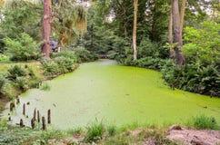 Groene water en installatie Royalty-vrije Stock Afbeelding
