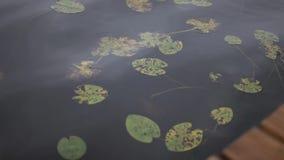 Groene waterlelies op het water in het meer stock videobeelden