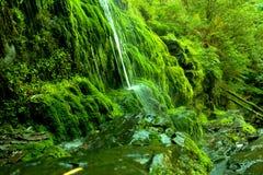 Groene waterval Stock Afbeelding