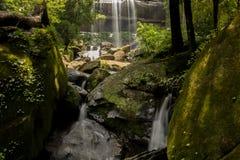 Groene watervallen, duidelijk, mooi, installaties, mos, rotsen Stock Afbeeldingen