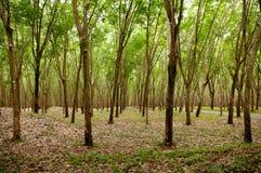 Groene Weelderige Paragraaf-rubberboomaanplanting in zuidelijk Thailand Stock Fotografie