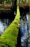 Groene weg aan toekomst Wij moeten zachte naturmanier vinden om duurzame en ecologische oplossingen te bereiken Een boom die over stock afbeeldingen