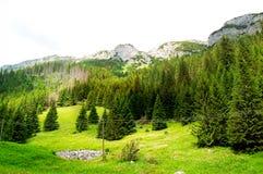 Groene weide bij de rand van het bos Stock Afbeelding