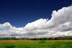 Groene weide in bloesem onder mooie hemel Royalty-vrije Stock Afbeelding