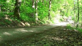 Groene weide en bomen dichtbij de steeg van het land stock video