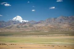 Groene weide en Mt.Kailash, Tibet stock fotografie