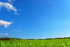 Groene weide met blauwe hemel Stock Foto's
