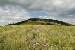 Groene weide met bloemen tegen de berg de recente zomer Stock Afbeelding