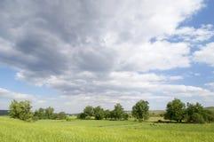 Groene weide met bomen en wolken stock afbeelding