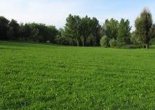 Groene weide met bosje stock afbeeldingen