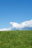 Groene weide met cumuluswolken Stock Foto