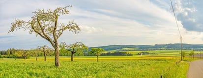 Groene weide met het panorama van fruitbomen - landelijk landschap stock afbeelding