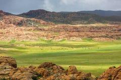 Groene weide met het weiden van vee in de bergen Royalty-vrije Stock Afbeelding