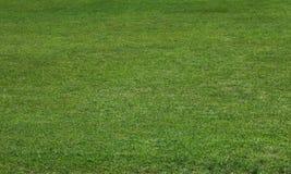 Groene weiden in de tuin royalty-vrije stock afbeelding