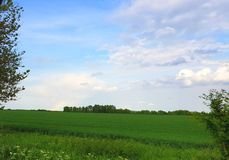 Groene weiden en een blauwe hemel stock afbeeldingen
