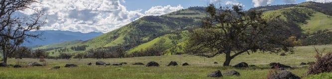 Groene weiden op bergen met eiken bomen royalty-vrije stock afbeeldingen