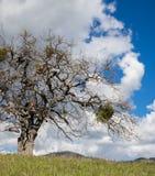 Groene weiden op bergen met eiken bomen stock foto's