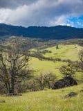 Groene weiden op bergen met eiken bomen stock foto