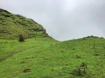 Groene weiden op de weiden van Kodachadri stock afbeeldingen
