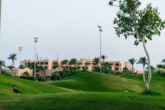 Groene weiden van een golfclub royalty-vrije stock foto's