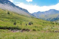 Groene weiden in Yarloo-vallei De Bergen van Altai siberi? Rusland stock foto