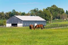 Groene weilanden van paardlandbouwbedrijven De zomerlandschap van het land Royalty-vrije Stock Afbeelding