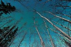 Groene wervelingen van Noordelijke Lichten over boreaal bos stock afbeeldingen