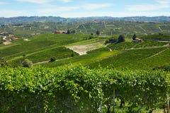 Groene wijngaarden in een zonnige dag in Piemonte, Italië Royalty-vrije Stock Fotografie