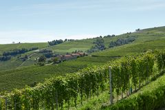 Groene wijngaarden en heuvels in een zonnige dag, blauwe hemel Stock Fotografie