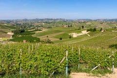 Groene wijngaarden op de heuvels van Langhe royalty-vrije stock foto