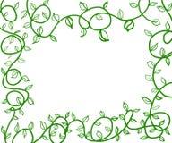 Groene wijnstokken Royalty-vrije Stock Afbeelding