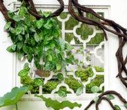 Groene wijnstokken die rond het venster worden verpakt Stock Foto