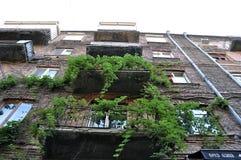 Groene wijnstokken en balkons stock foto's