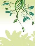 Groene wijnstokkenachtergrond Stock Afbeeldingen