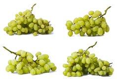 Groene wijnstokreeks Stock Afbeelding