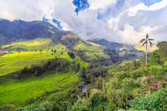 Groene wildernis in bergen Royalty-vrije Stock Foto