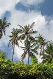 Groene wildernis op het eiland van Bali, Indonesië Tropische regenwoudscène stock afbeeldingen
