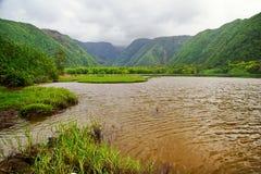 Groene wildernis van Hawaï royalty-vrije stock fotografie