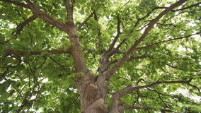 Groene Wildernisbomen tegen Blauwe Hemel en Glanzende Zon Reis stock videobeelden