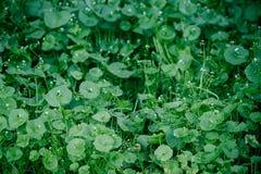 Groene Wildflowers in een Weide Stock Fotografie
