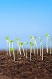 Groene zaailing Stock Foto