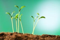 Groene zaailing - concept het nieuwe leven Stock Afbeeldingen